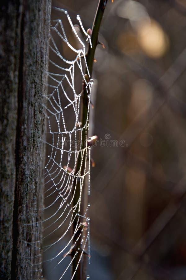 Frostspindeln?t i en kall morgon Spindelreng?ringsduk p? ett gammalt tr?dstaket Spindeln?t spiderweb med vattendroppe royaltyfri fotografi