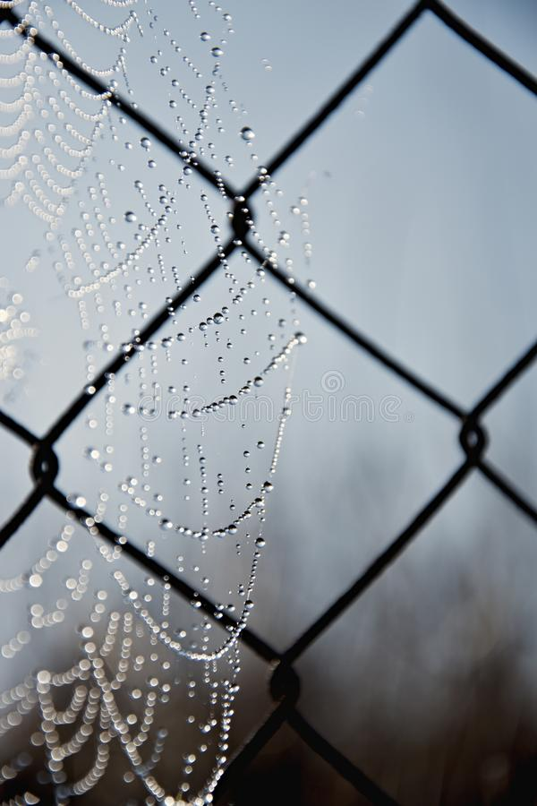 Frostspindeln?t i en kall morgon Spindelreng?ringsduk p? ett gammalt tr?dstaket Spindeln?t spiderweb med vattendroppe arkivfoto