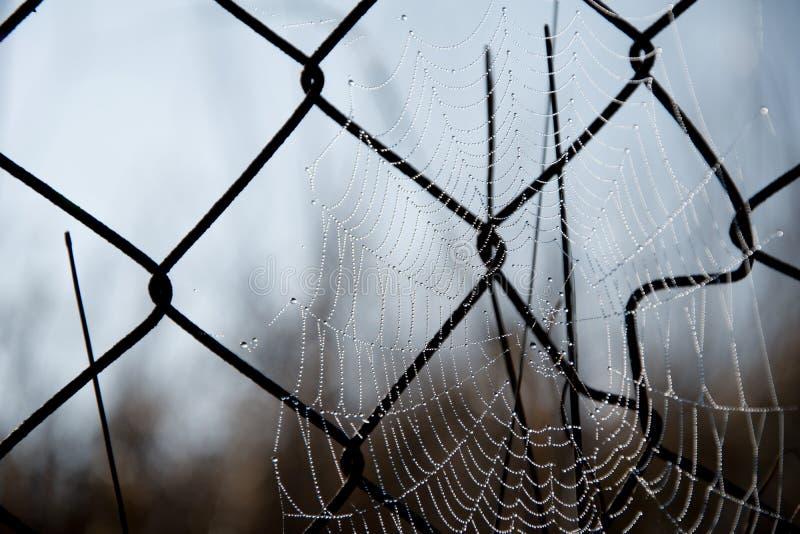 Frostspindeln?t i en kall morgon Spindelreng?ringsduk p? ett gammalt tr?dstaket Spindeln?t spiderweb med vattendroppe royaltyfri foto