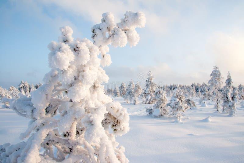 frosty imagens de stock royalty free