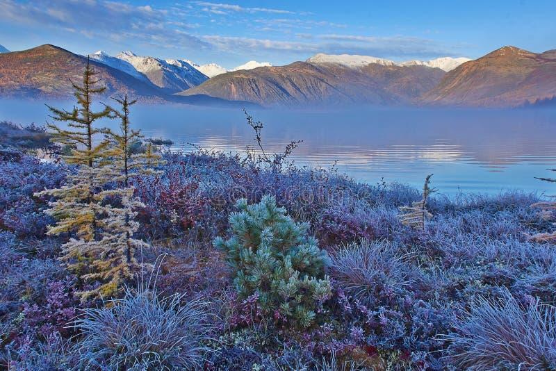 Download Frosty Autumn Dawn On Jack London's Lake. A Fog. Hoarfrost On Plants. Kolyma Stock Image - Image: 65616581