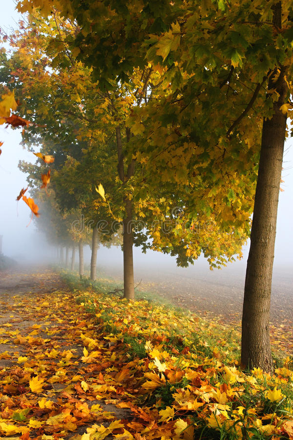 Download Frosty autumn leaves stock photo. Image of brown, ground - 16534230
