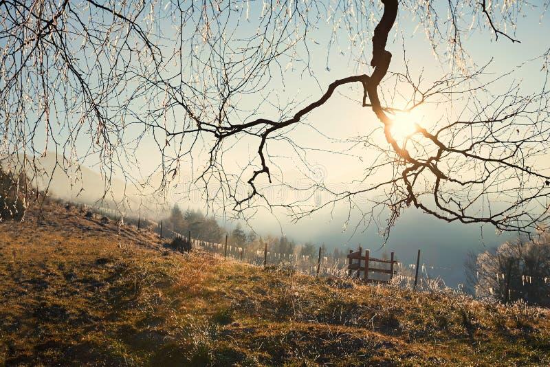 Frosty autumn morning royalty free stock photos