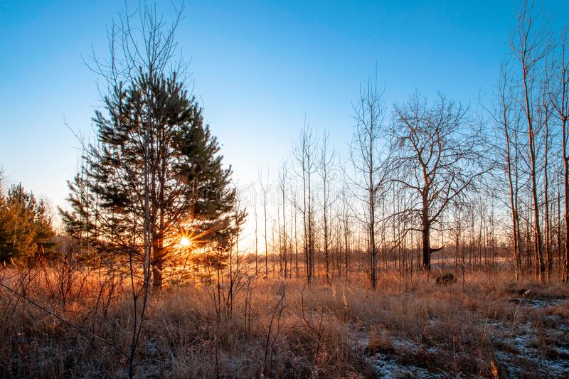 Frosty autumnal morning nature scene with trees stock photography