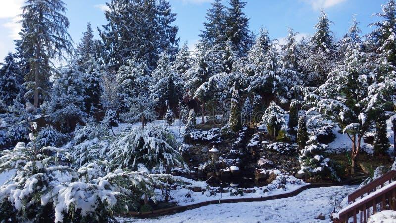 Frosty Bckyard royalty-vrije stock fotografie
