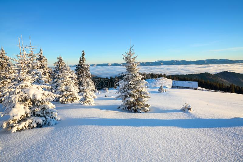 On a frosty beautiful day among high mountains and peaks are magical trees covered with white fluffy snow. royalty free stock images