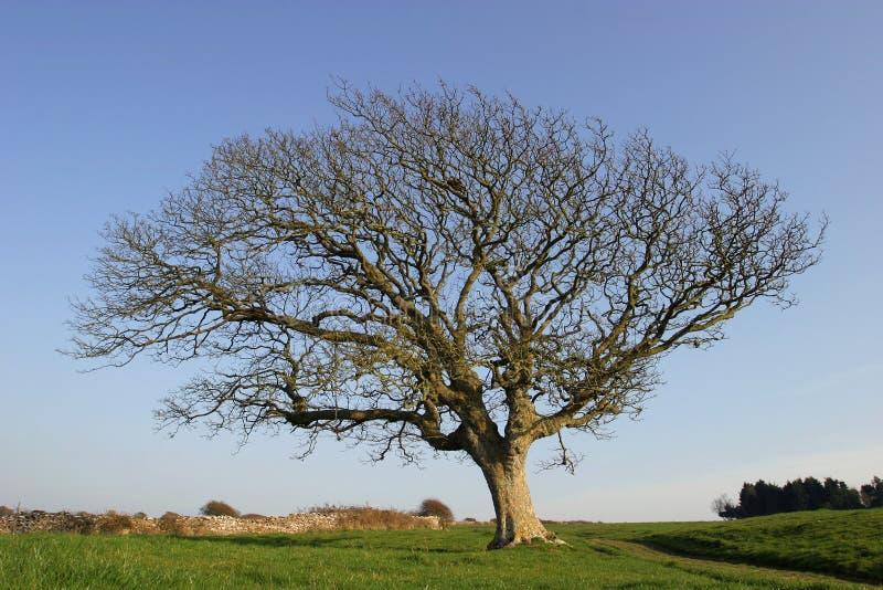 Frosty Drzewa Zdjęcia Royalty Free