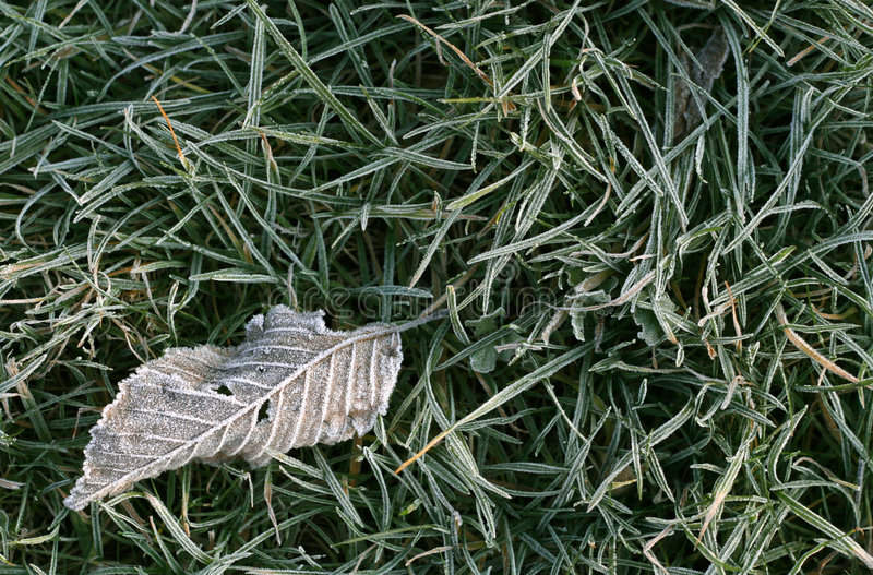 Download Frosty fallen leaf stock image. Image of close, frost - 7168985