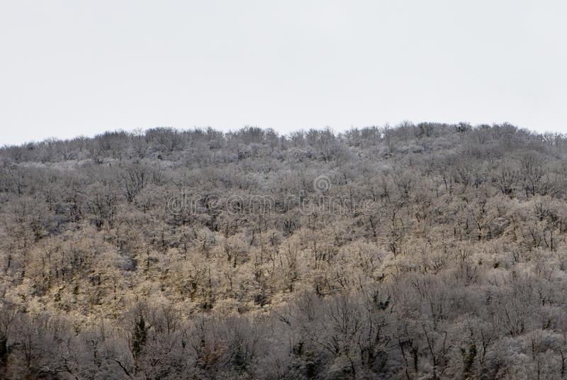 Frosty Forest On Mountain Slope stockbilder