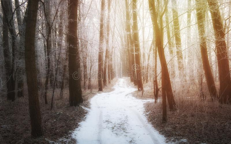 Frosty dreamy winter path through the forest royalty free stock photography