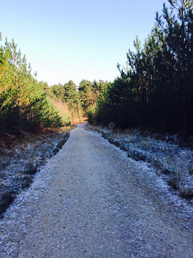 Frosty Forest Walk lizenzfreie stockfotos