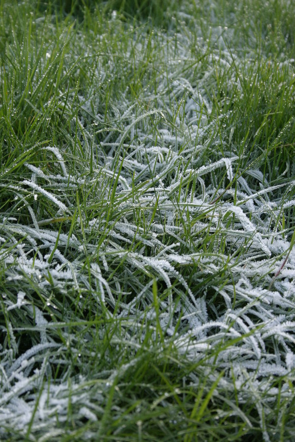 Frosty Grass stock photo
