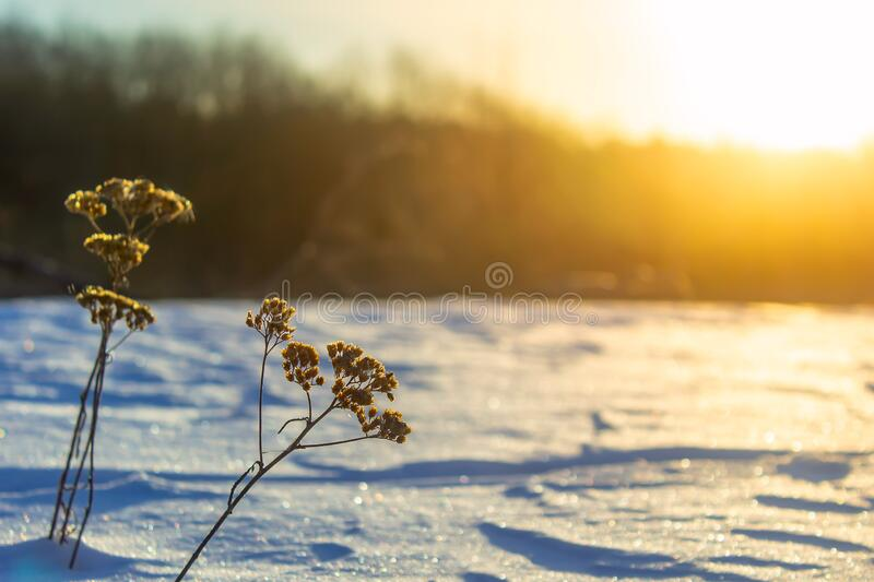 Frosty grass at winter and spring sunset in Russia. Beautiful background stock photo