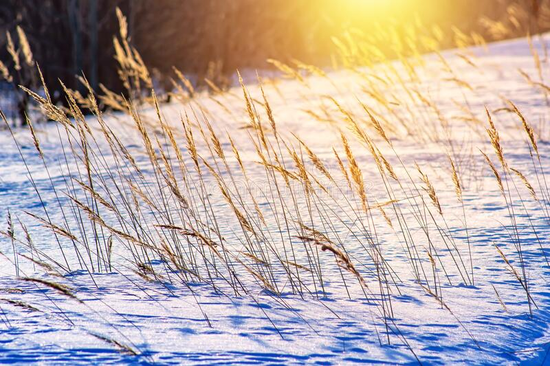 Frosty grass at winter and spring sunset in Russia. Beautiful background royalty free stock images