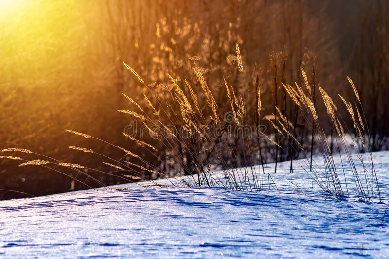 Frosty grass at winter and spring sunset in Russia. Beautiful background stock photography