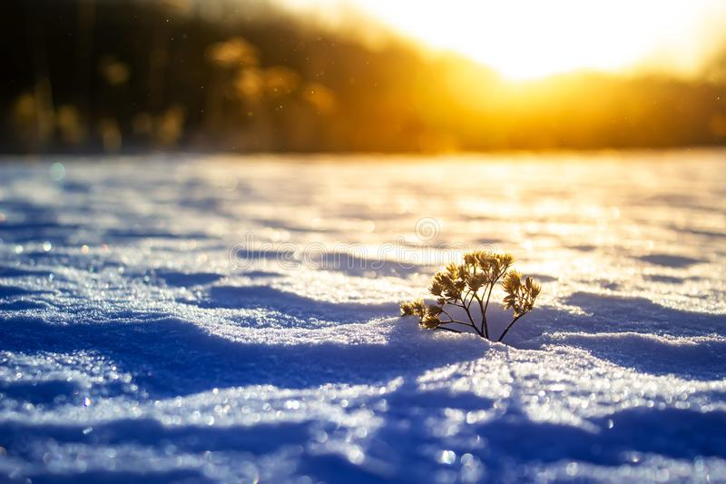 Frosty grass at winter sunset. Winter background stock image