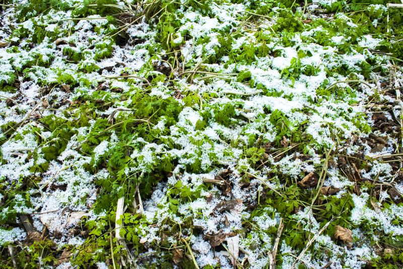 Frosty green forest floor royalty free stock photography