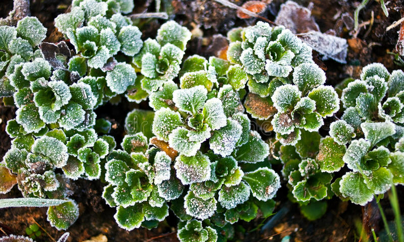 Download Frosty Green Leaves Stock Image - Image: 28067481