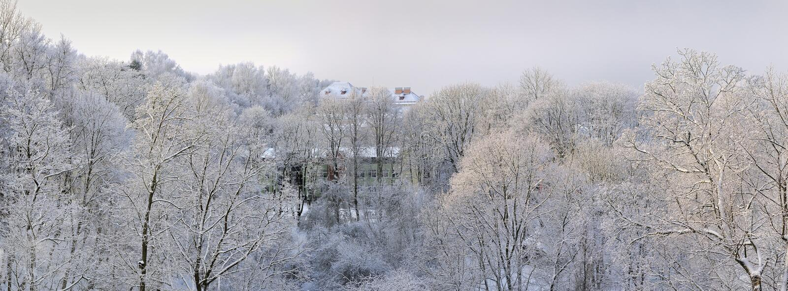 Download Frosty january day stock photo. Image of season, nature - 28639576