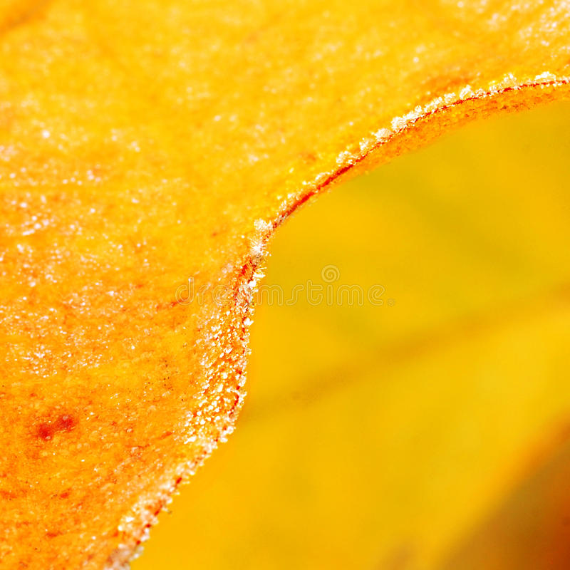 Frosty Leaf royalty free stock photography