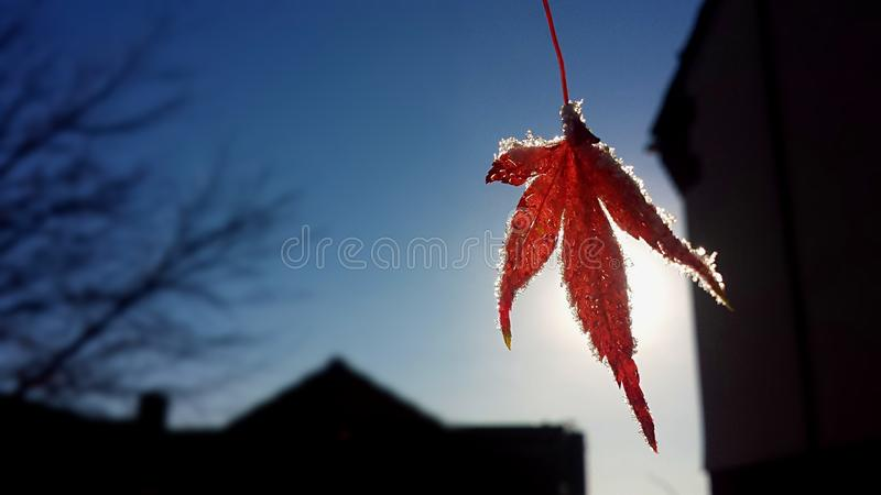 A frosty leaf in the Autumn royalty free stock images