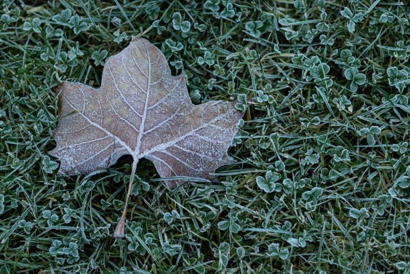 Frosty leaf on grass stock image