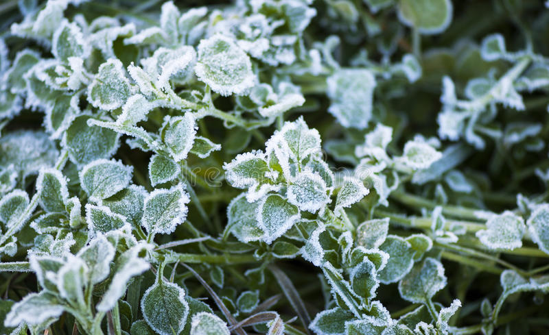 Download Frosty Leaves stock photo. Image of background, frost - 28511664