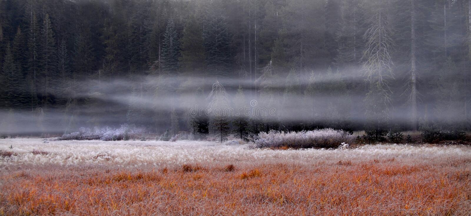 frosty meadow rano Yosemite obraz stock