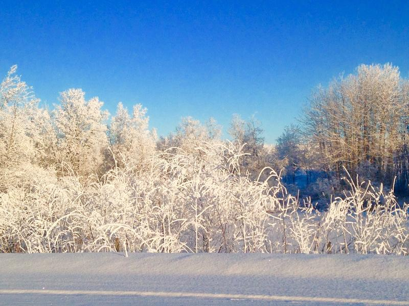 Frosty mornin royalty free stock images