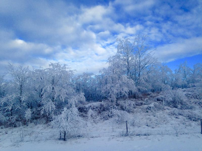 Frosty mornin royalty free stock photos