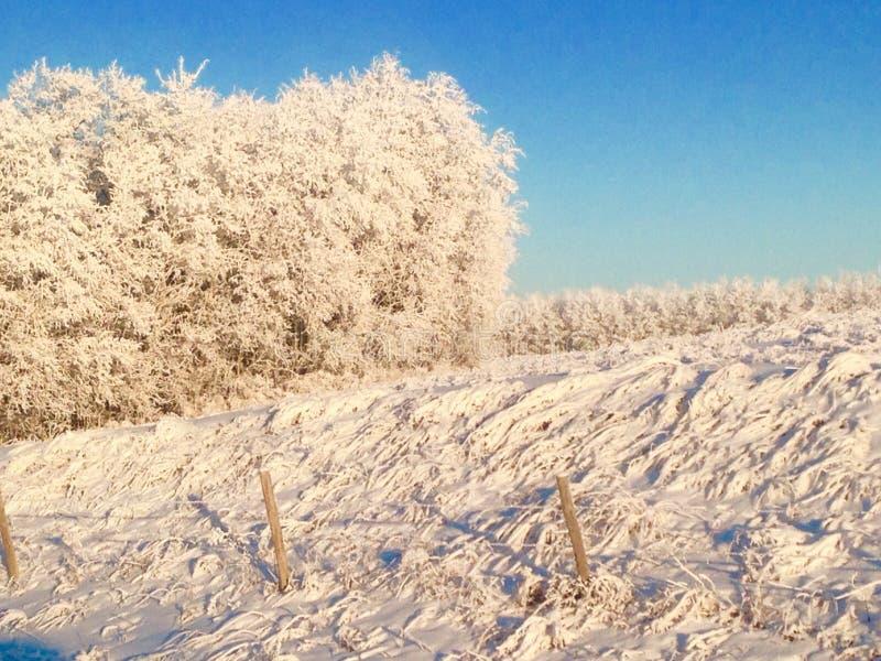 Frosty mornin royalty free stock photography