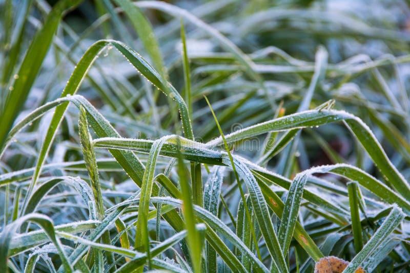 Frosty Morning photo stock