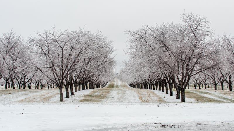 Frosty Morning in de Boomgaard royalty-vrije stock foto
