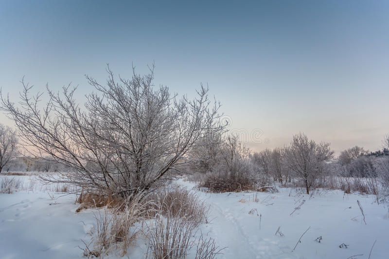 Frosty morning. royalty free stock photography
