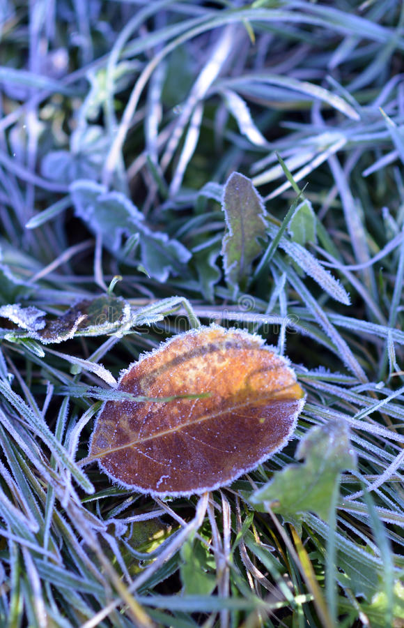 Frosty morning leaf royalty free stock photography