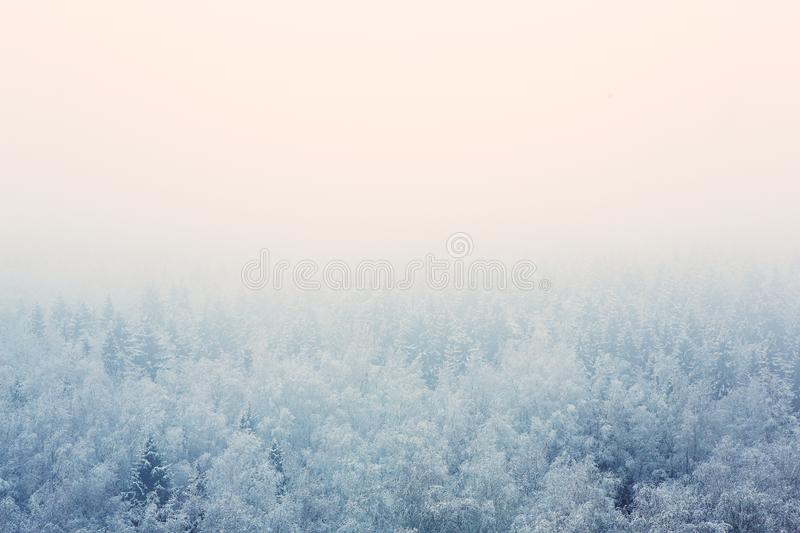 Frosty morning mist over the forest stock photo