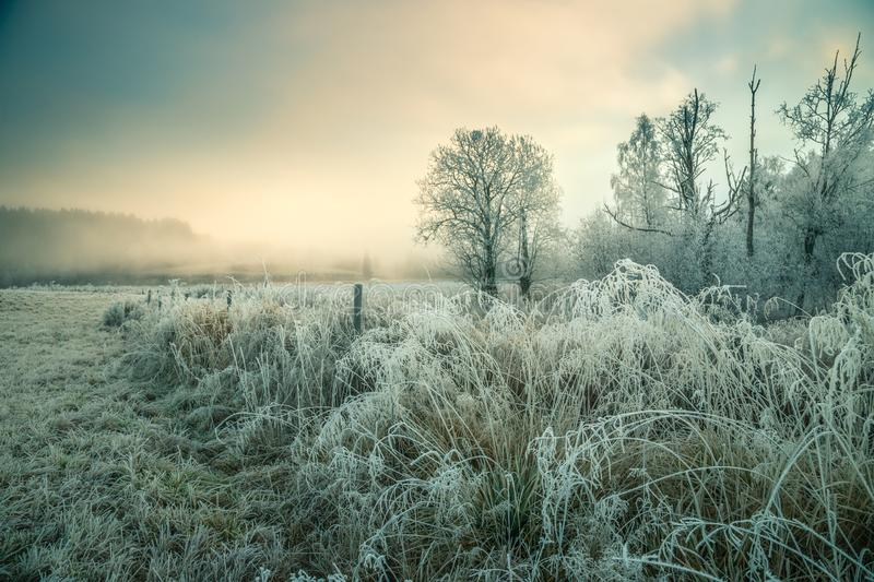 Hoar frost and snowy landscape royalty free stock image
