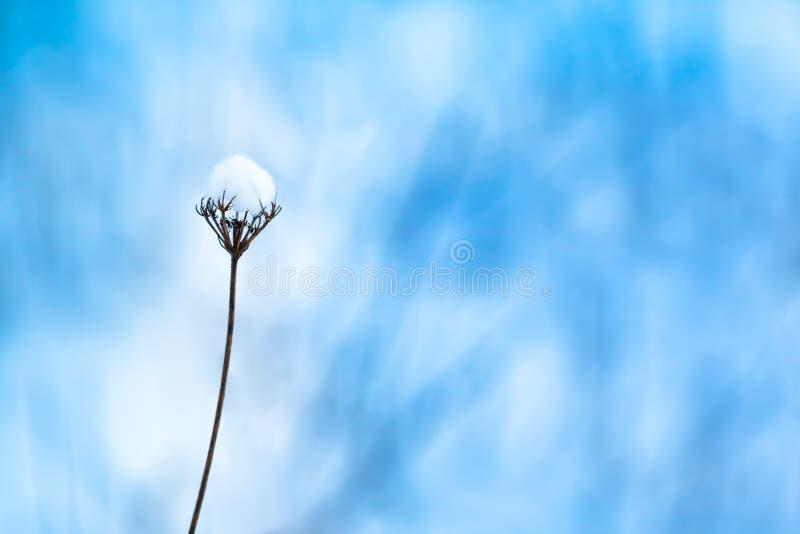 Frosty Nature Detail immagine stock libera da diritti