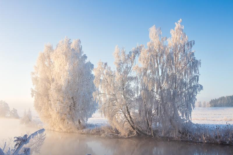 Frosty nature landscape at sunny winter morning. Sun illuminates snowy trees on river bank. royalty free stock images