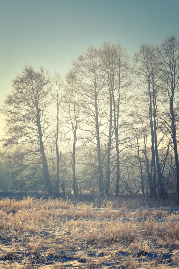 Frosty nature scenery. Bare shapes of leafless trees, frosty nature scenery. Tint image royalty free stock photography