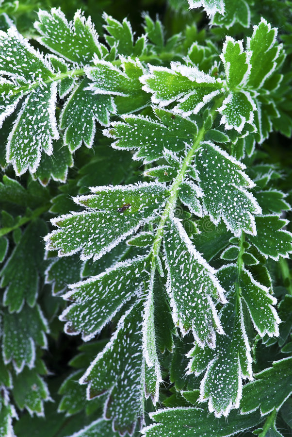 Frosty plants in late fall royalty free stock photo