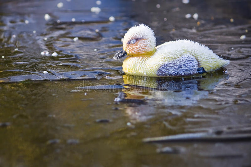 Frosty Plastic Duckling on Ice
