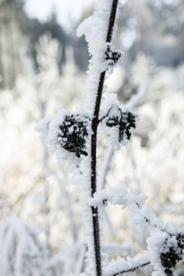 Frosty Rime lizenzfreie stockbilder