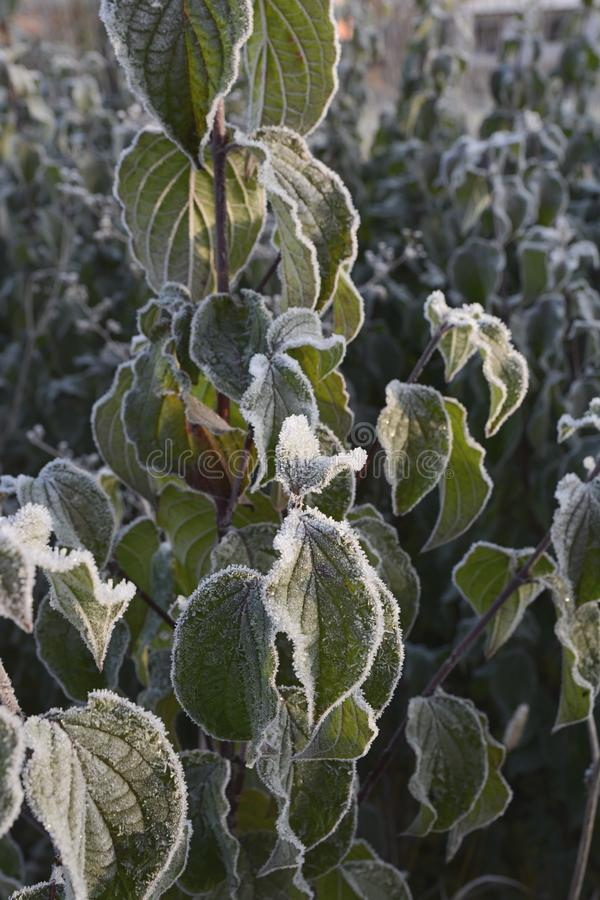 Frosty Rime stockbild