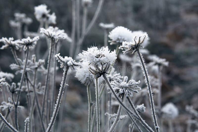 Frosty Rime lizenzfreies stockbild