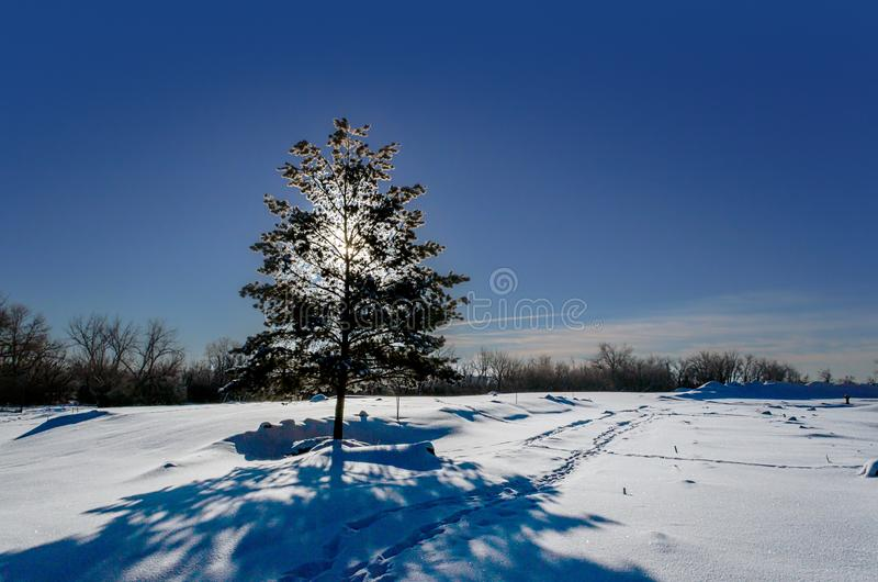Frosty, snowy night with a purple sky, Christmas tree at night royalty free stock image