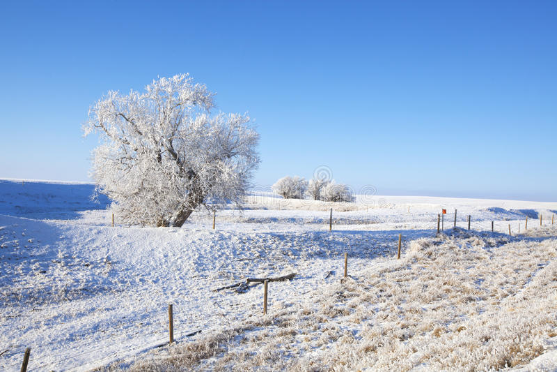 Frosty Southern Alberta stockbilder