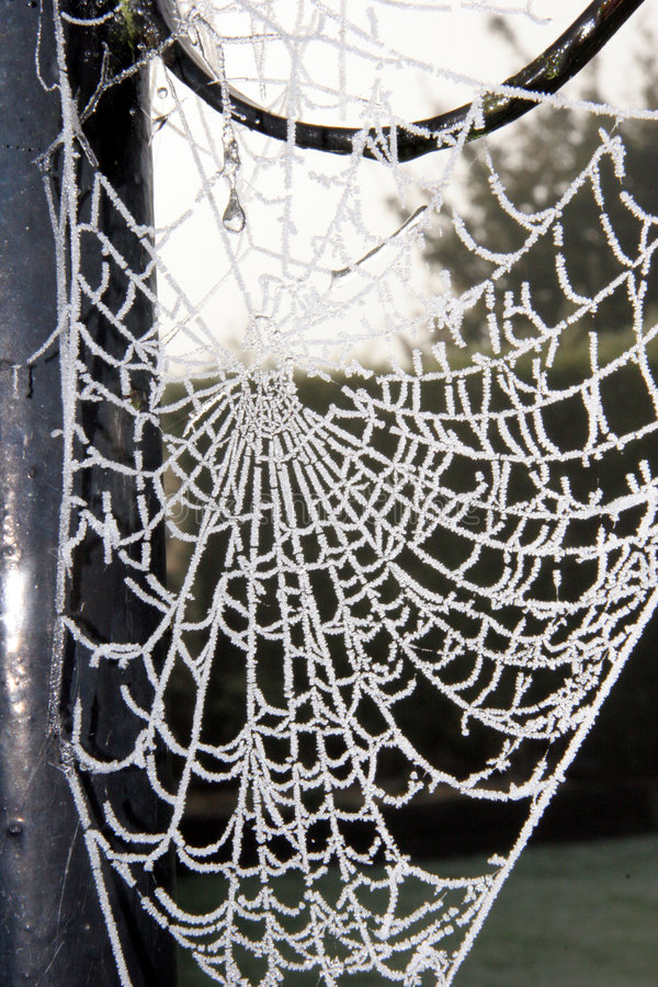 Frosty spider's web stock photos