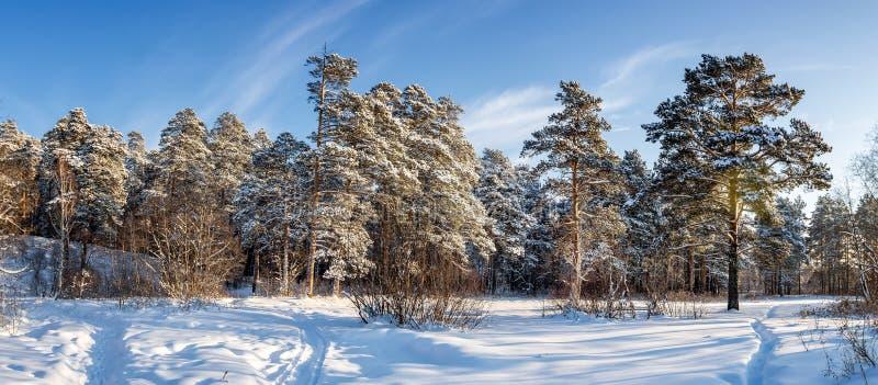Frosty Sunny-dag in het Oeralgebergte een bos met een bevroren rivier, Rusland stock fotografie