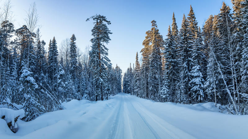 Frosty Sunny day in the Urals a forest with a dirt road, Russia, January stock photography